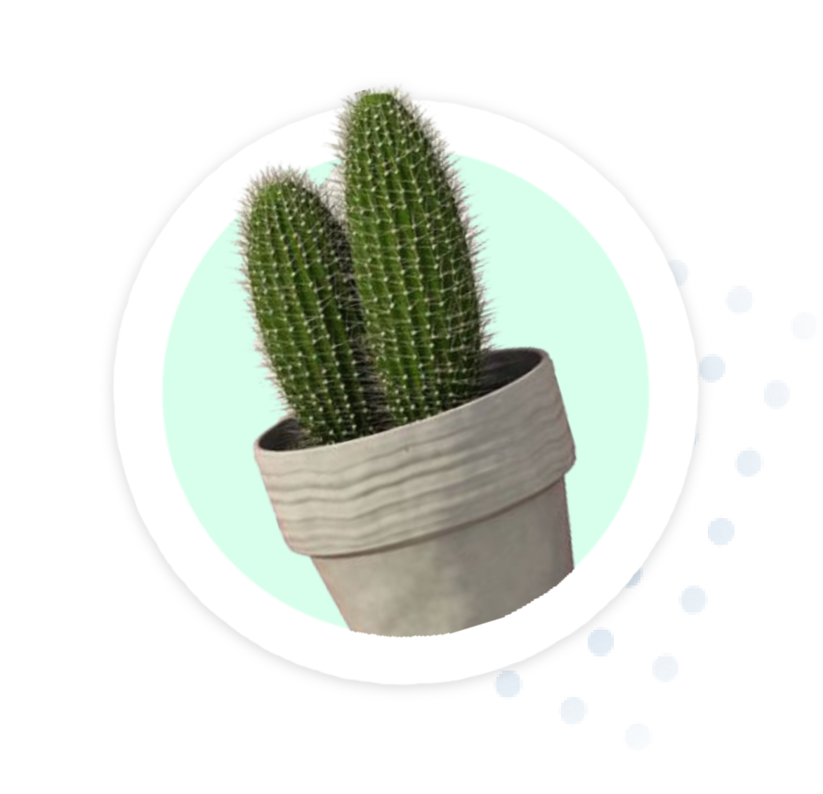 cactus footer