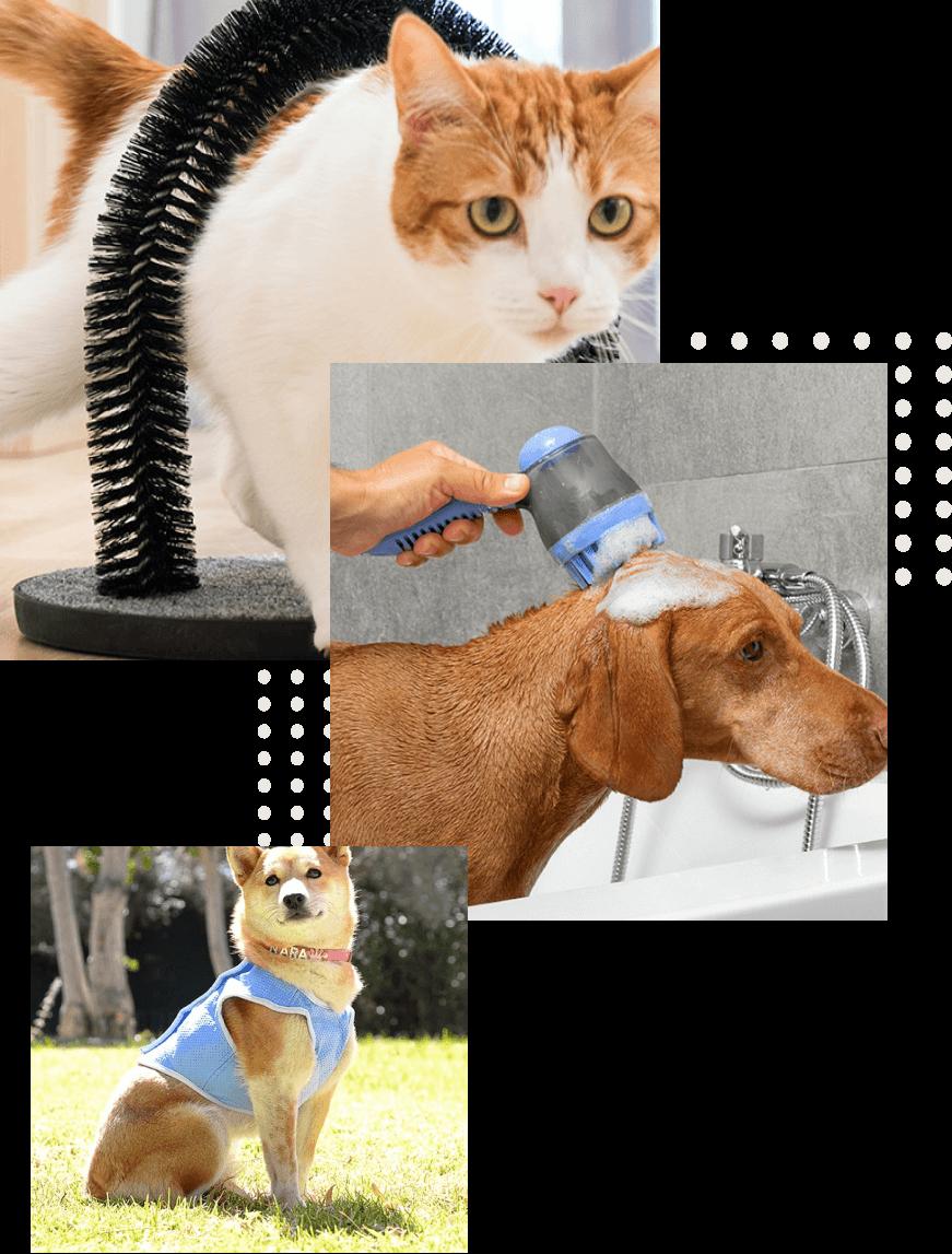 animais de estimação 4
